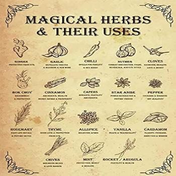 Magical Herbs and Their uses Witchy Poster Witchcraft